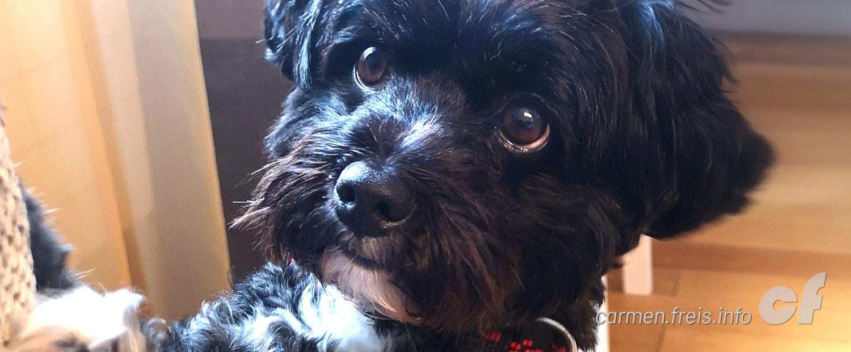 Carmen und mein Hund Lucky Frei